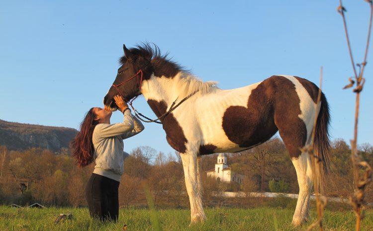 Пет интересни факта за психологията на конете