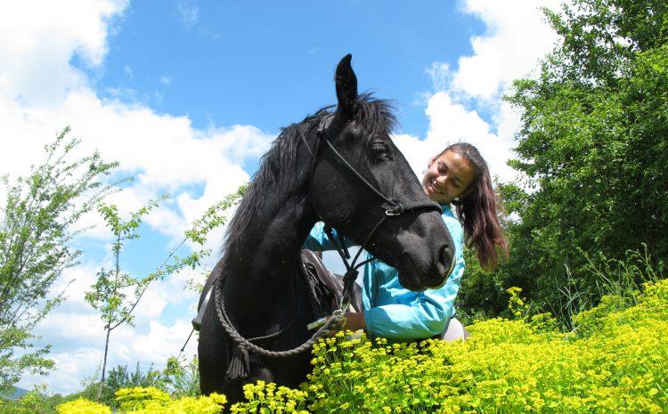 Конят моят приятел